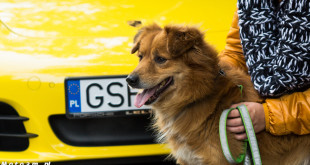 Porsche Dog Day 2015 Ciapkowo-05773