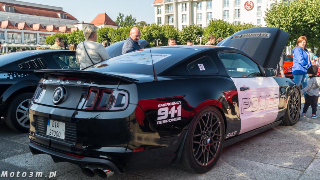 -Born to be free- - wystawa Mustangów w Sopocie -00076