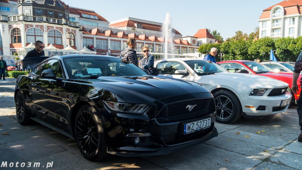 -Born to be free- - wystawa Mustangów w Sopocie -00081