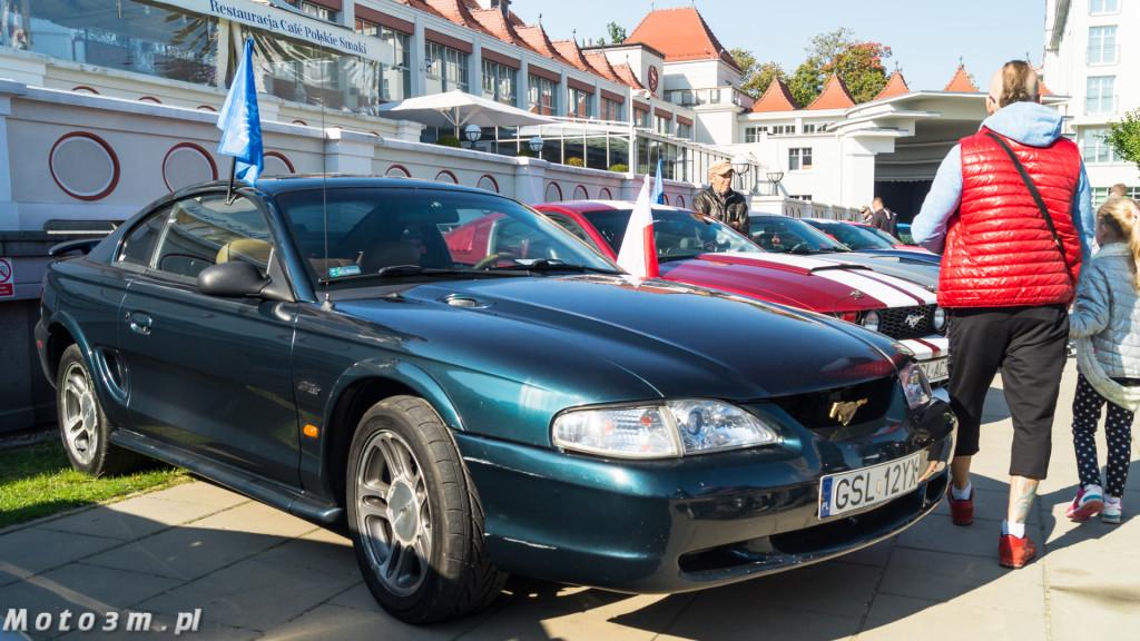 -Born to be free- - wystawa Mustangów w Sopocie -00086