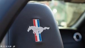 -Born to be free- - wystawa Mustangów w Sopocie -00126