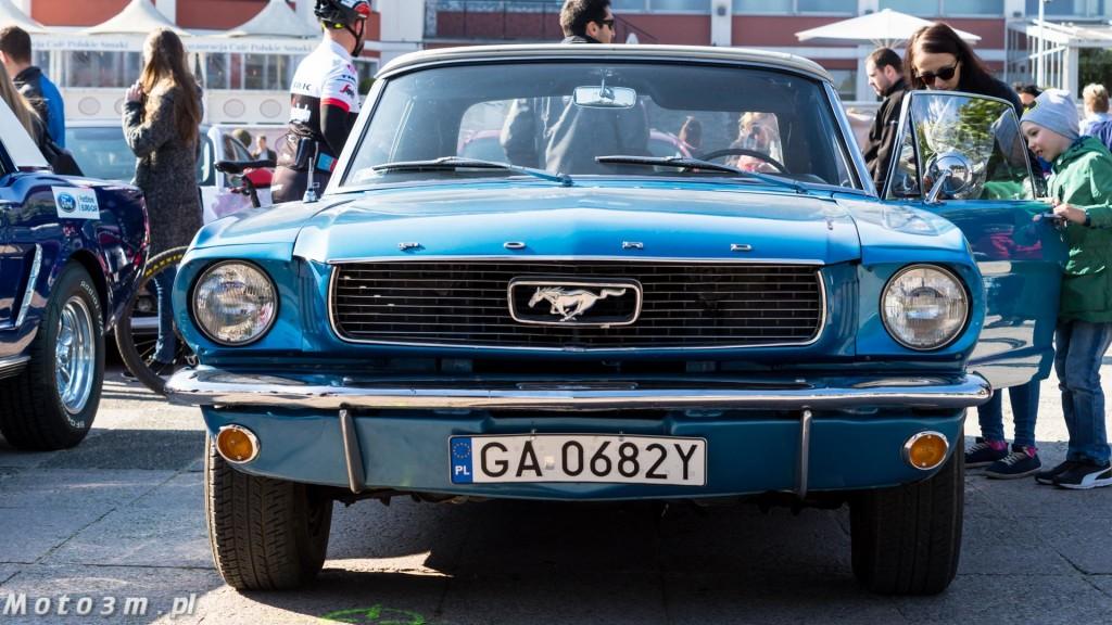 -Born to be free- - wystawa Mustangów w Sopocie -00133