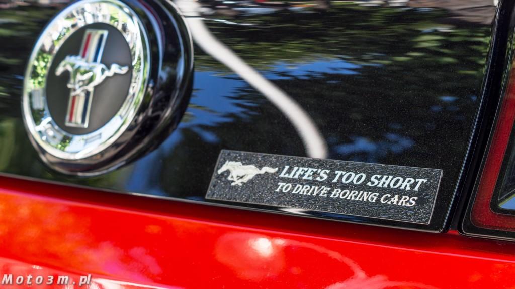 -Born to be free- - wystawa Mustangów w Sopocie -00148