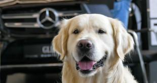Mercedes-Benz Witman-1640242
