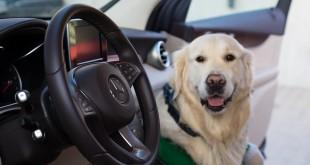 Mercedes-Benz Witman zebrał jedzenie dla psów ze schroniska Promyk w Gdańsku-03125